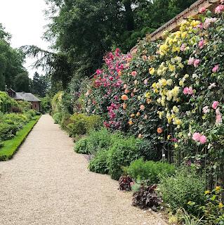 allée fleurie de rose du jardin de bagatelle