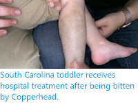 https://sciencythoughts.blogspot.com/2019/10/south-carolina-toddler-receives.html