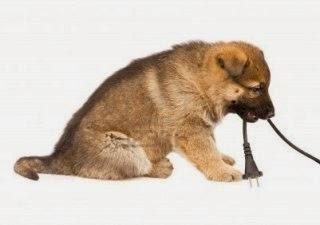 Peligro de que el perro muerda los cables