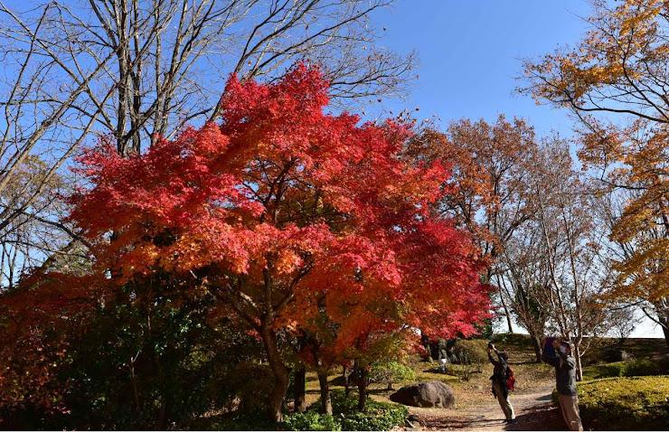 桜山公園の紅葉3