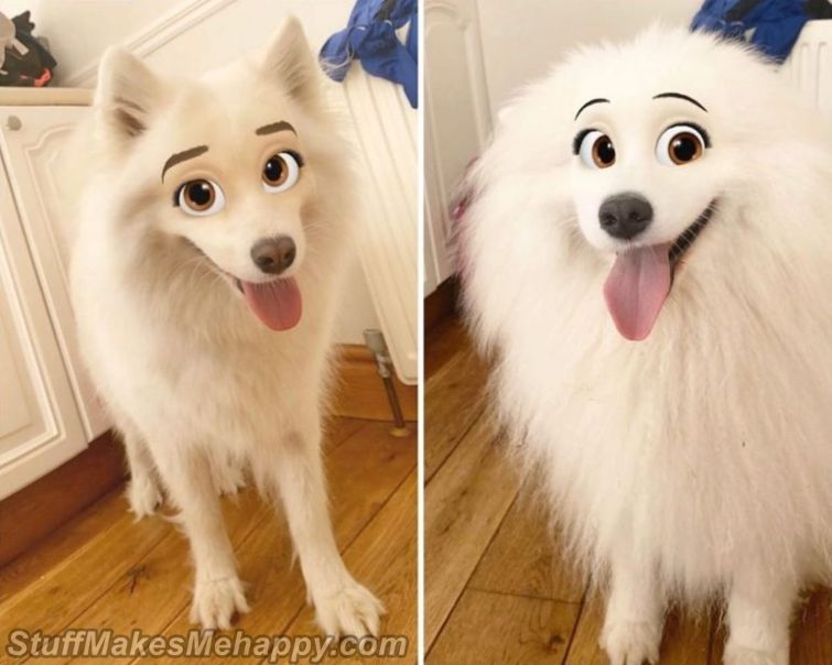 Snapchat Filter Turns Your Dog into A Disney Character
