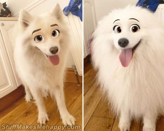 This Snapchat Filter Turns Your Dog into A Disney Character