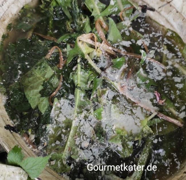 Gourmetkaters Grüntipp: Düngen mit Pflanzenjauche