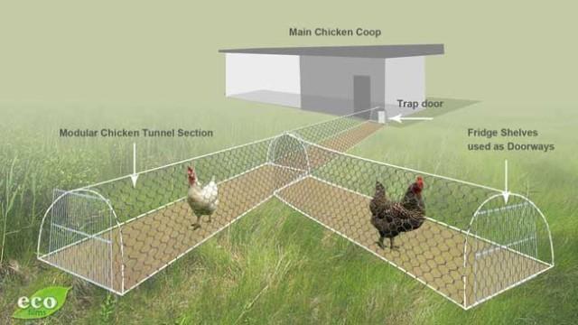 การวางแผ่นทำทางเดินให้ไก่