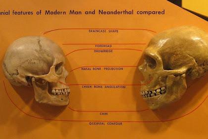 Corak Kehidupan Manusia Purba ( Masa Paleolithikum, Mesolithikum dan Perundagian )