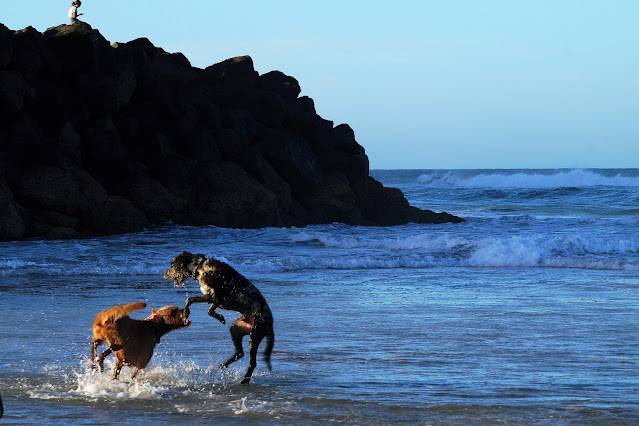 Don't Travel the World Without Your Dog, Dogs on the beach