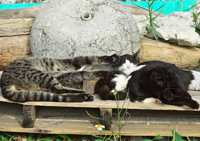 のび~る猫と若干鬱陶しそうな猫達との写真