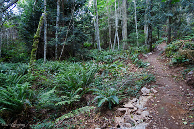 The John Tursi Trail
