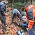 Μια αρκούδα ήταν πιασμένη σε παγίδα-θηλιά. Άμεση παρέμβαση και απελευθέρωση της