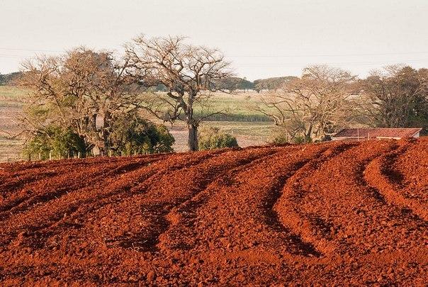 Terra roxa - красная земля, Бразилия