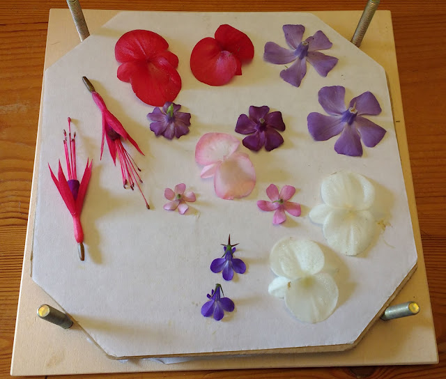 Pressing flowers in summer