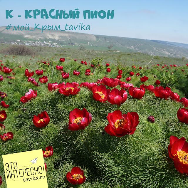 цветы Крыма. пион узколистный