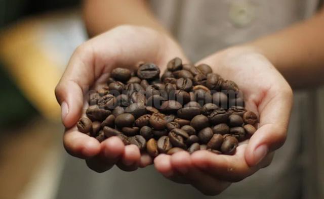 Sejarah kopi kenya