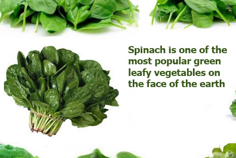 Spinach benefits side effects
