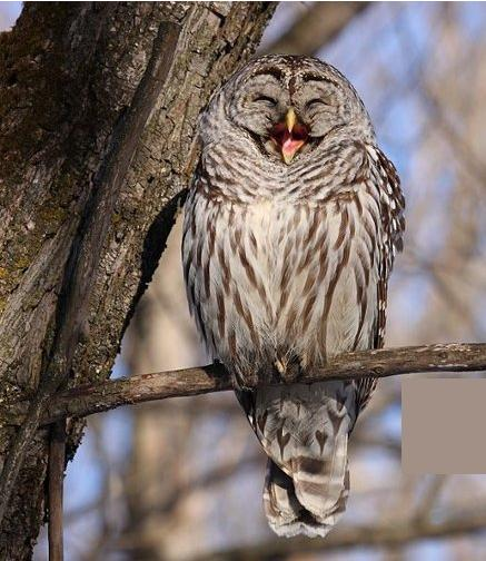 The Owl's Perch: All About Owls