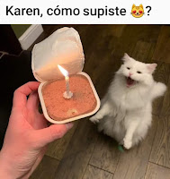 cumpleaños de gato humor