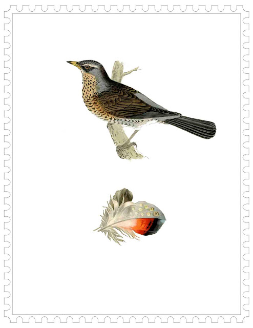 speckled-bird-colored-feather-ready-to-print