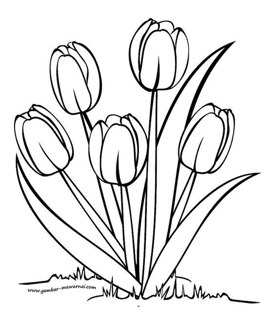 Hình tô màu ba bông hoa Tu lip đẹp