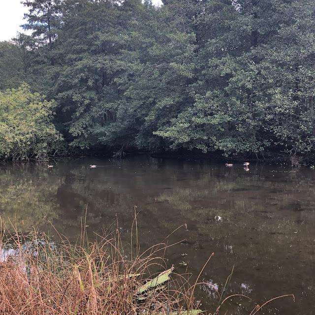 Ducks enjoying a quiet pond at University of Wisconsin - Madison Arboretum