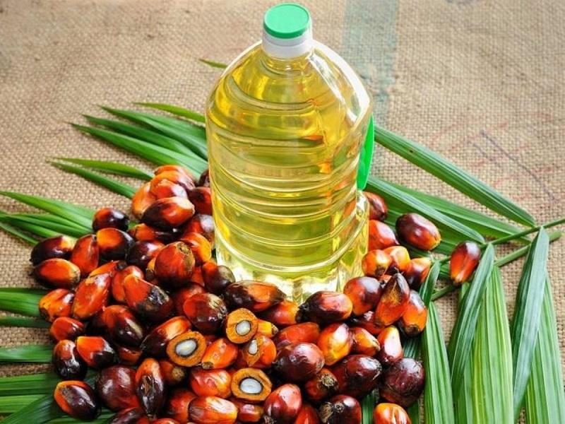 11 Benefícios do Óleo de Palma à Saúde
