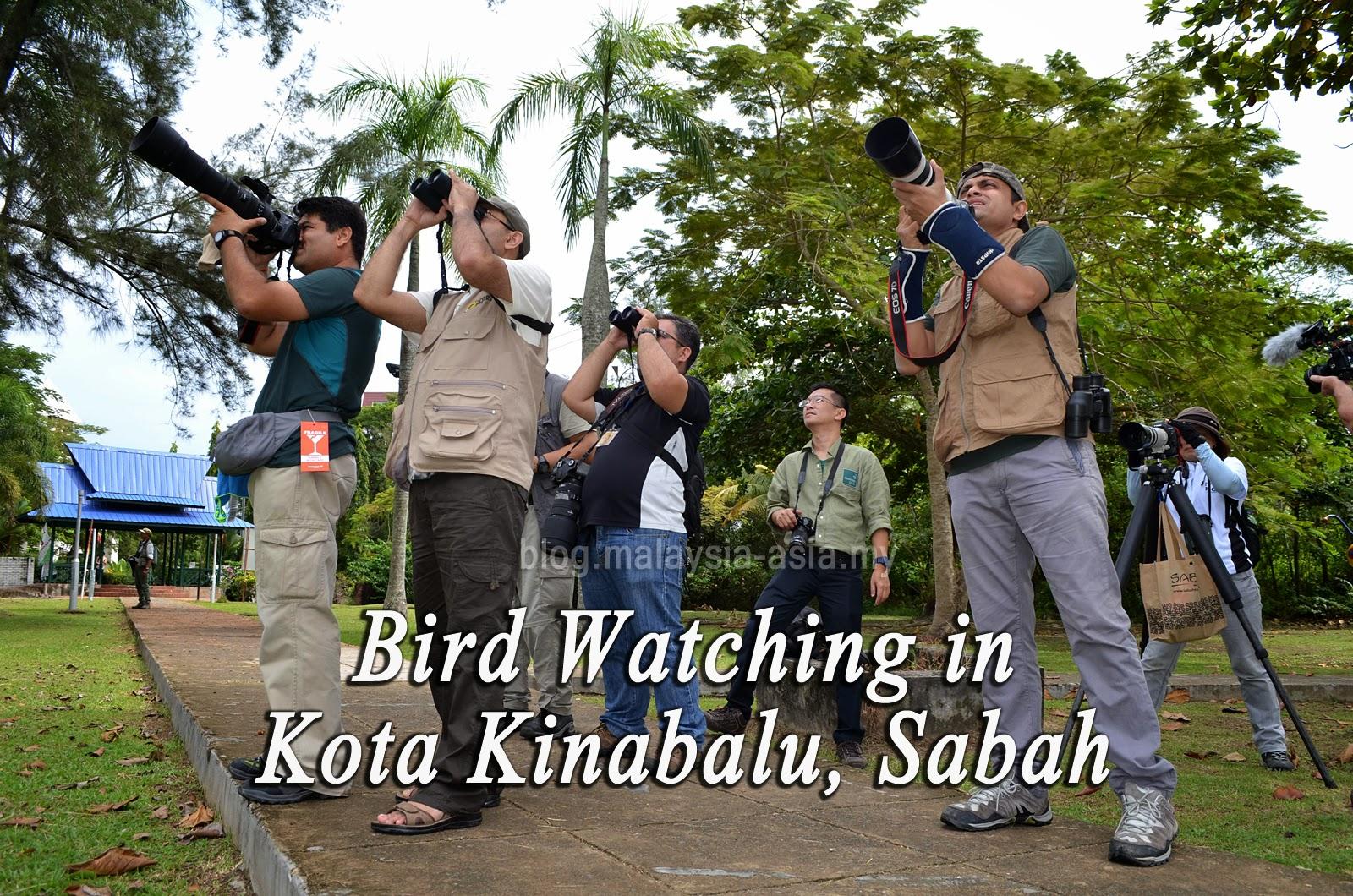 Bird Watching in Kota Kinabalu Sabah