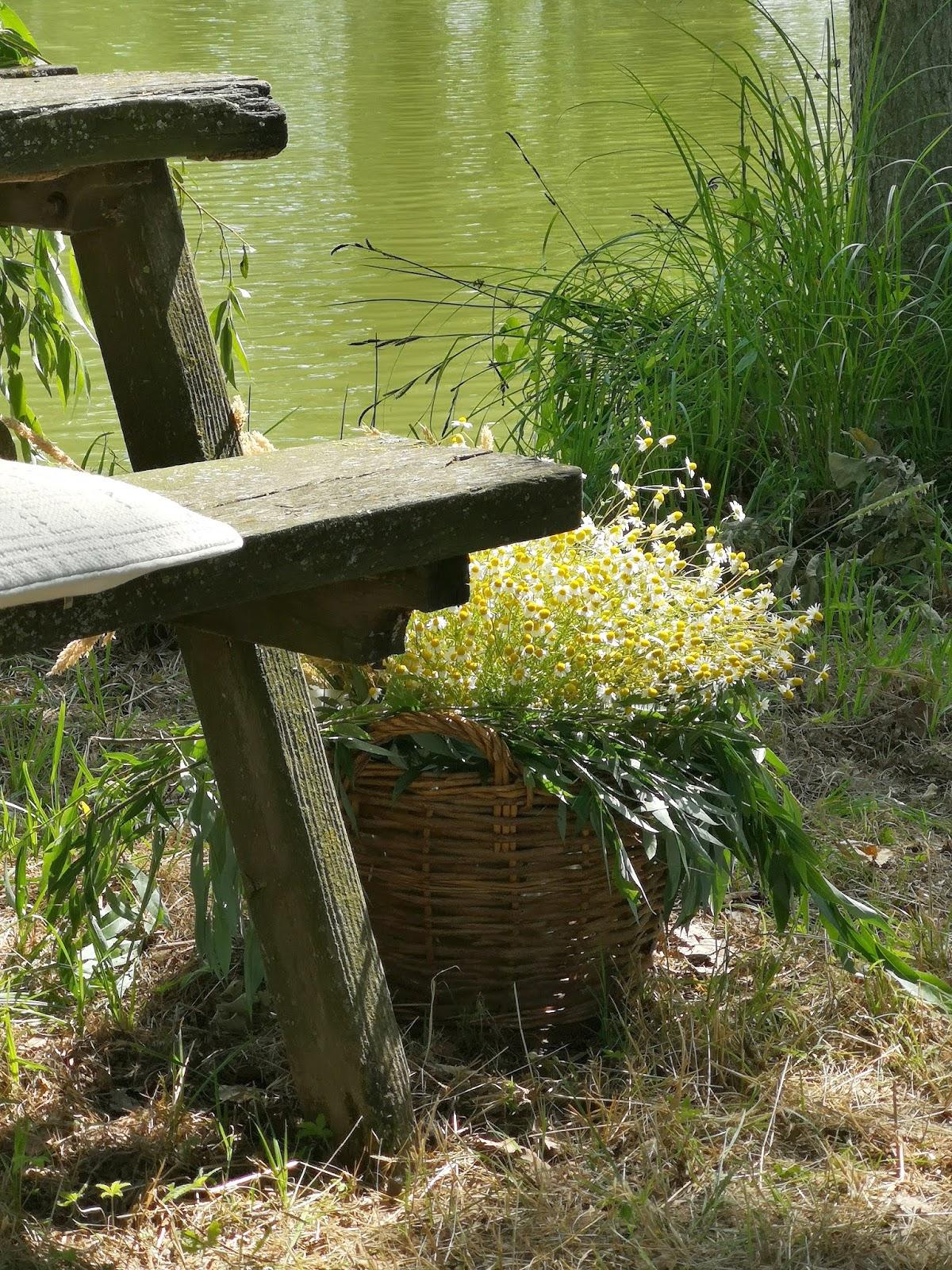 picnic sul lago