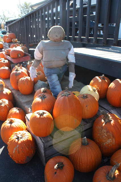 Skelly's Farm Market scarecrow and pumpkins