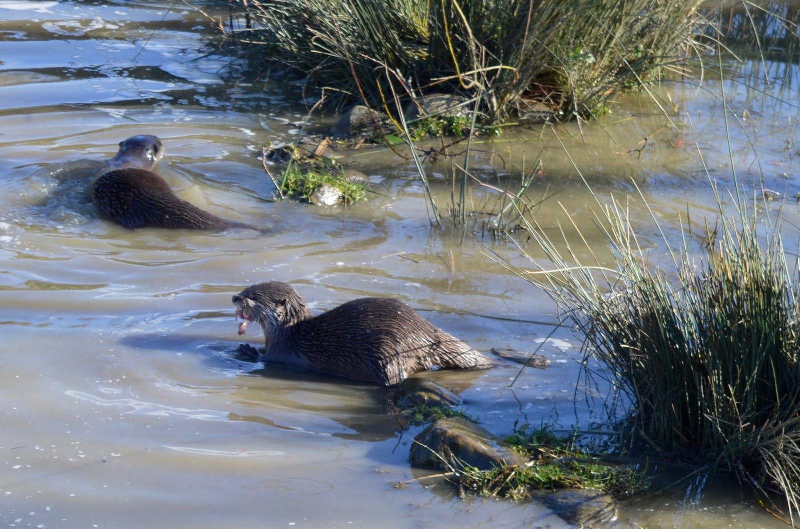 WWT Washington Wetland Centre | An Accessible North East Day Out for the Whole Family - otter feeding