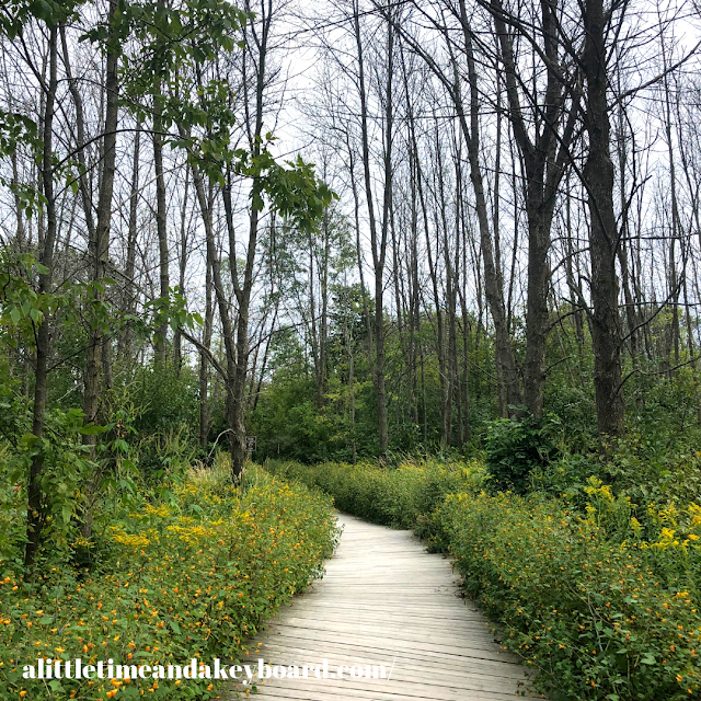 Beginning our journey following the boardwalk  surrounded by trees and wildflowers at Lion's Den Gorge Nature Preserve in Grafton, Wisconsin