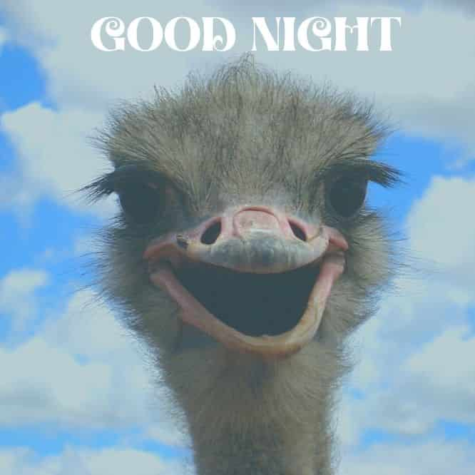 make-love-to-funny-bird-good-night