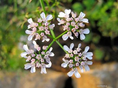 Δηλητηριώδη φυτά: βοηθήματα