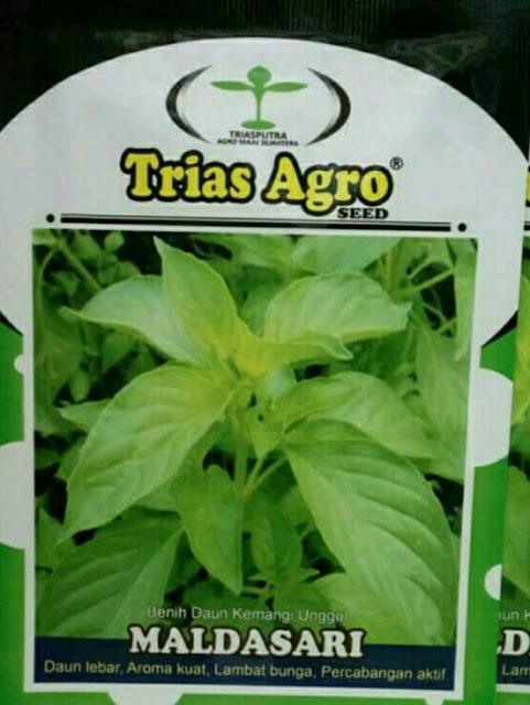 Benih Kemangi Unggul MALDASARI Produk Trias Agro Seed