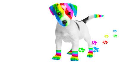 El perro arcoíris sonríe en Cice