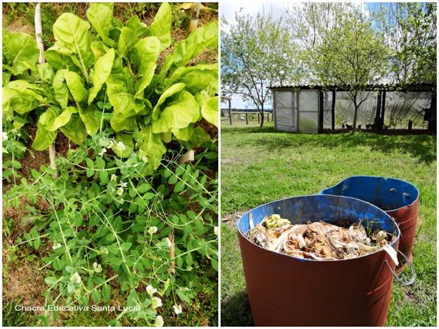 Hortalizas en la huerta / Residuos orgánicos para el compost - Chacra Educativa Santa Lucía