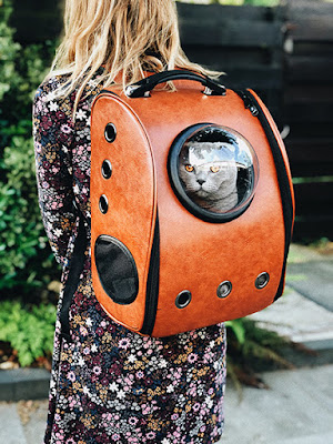 A person is carrying a grey cat in a special cat backpack and the cat is peering out of the window in the bag
