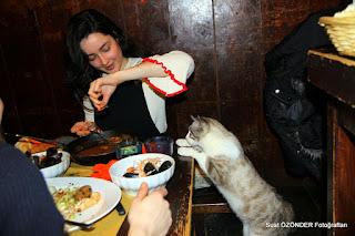 The cat gourmand at Il Paradiso Perduto