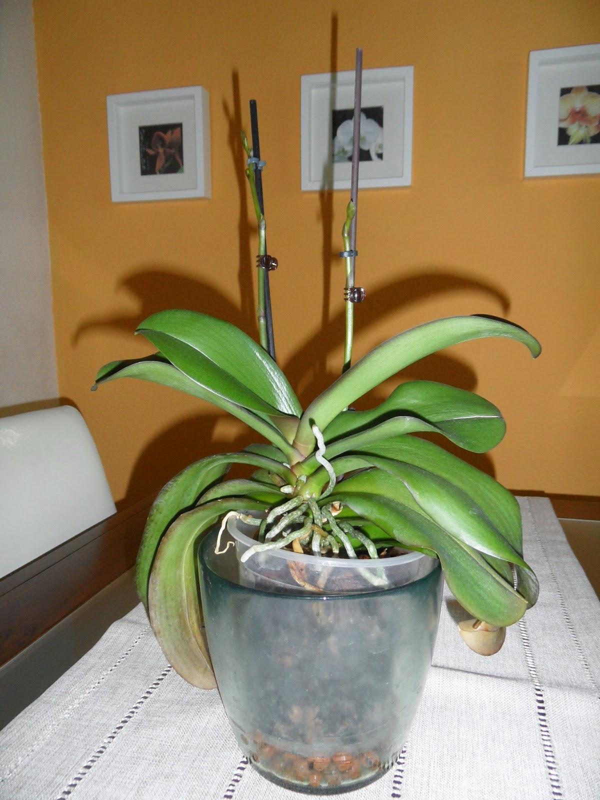 Las orquídeas de Berni: 2015