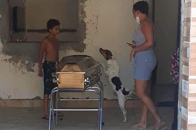 Cachorro chora e acompanha velório da dona ao lado do caixão na Bahia