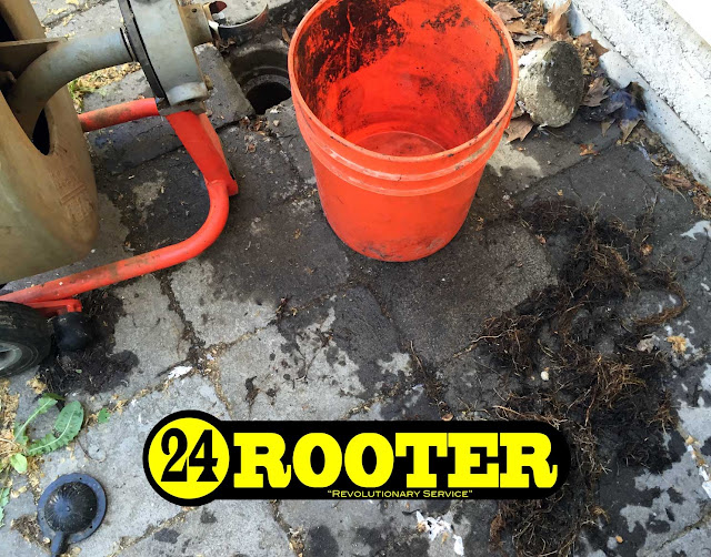 yakima drain plumber showing how rooter companies handle roots growing in a main line