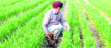 An attempt to attract farmers to go organic - Punjab Insight, Organic Farming