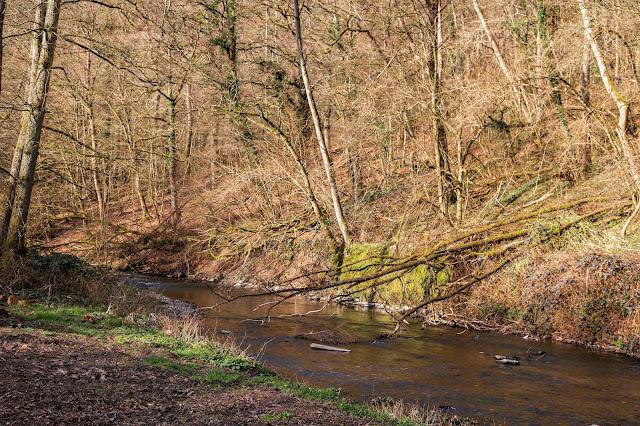 Traumpfad Eltzer-Burgpanorama  Premiumwanderweg  Traumpfade Rhein-Mosel-Eifel-Land  Wanderung Burg-Eltz 11