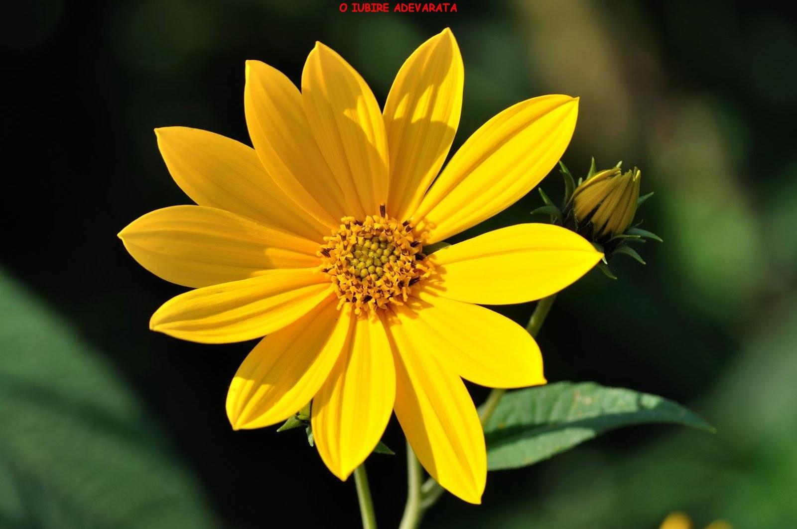 Flori Imagini 31 Mesaje Dragoste Poze