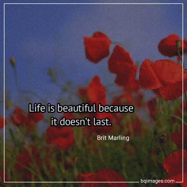 life is beautiful Photos