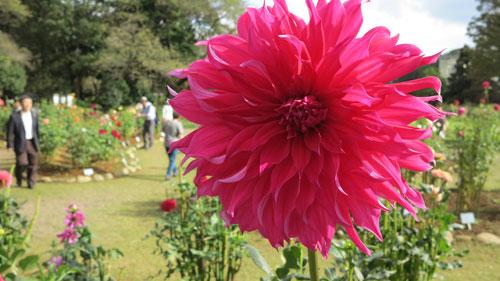 Jindai Botanical Gardens, Tokyo