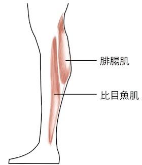 練出勻稱美腿關鍵在膝蓋!3招瘦小腿不怕越練越粗