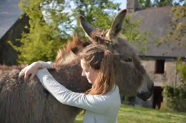 Unknown Facts About Donkey in Hindi