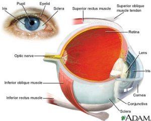 Tip Menjaga Kesehatan Mata