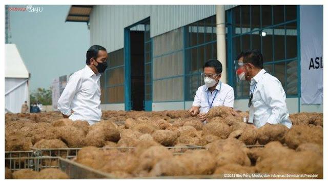 Diklaim Rendah Kalori, Jokowi Sebut Porang Bisa Jadi Makanan Pokok Masa Depan