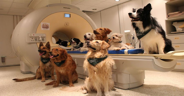 Οι σκύλοι μπορούν να καταλάβουν τι τους λέμε, σύμφωνα με τους επιστήμονες!