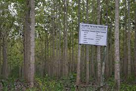 Kegiatan Pembentukan Wilayah Pengelolaan Hutan
